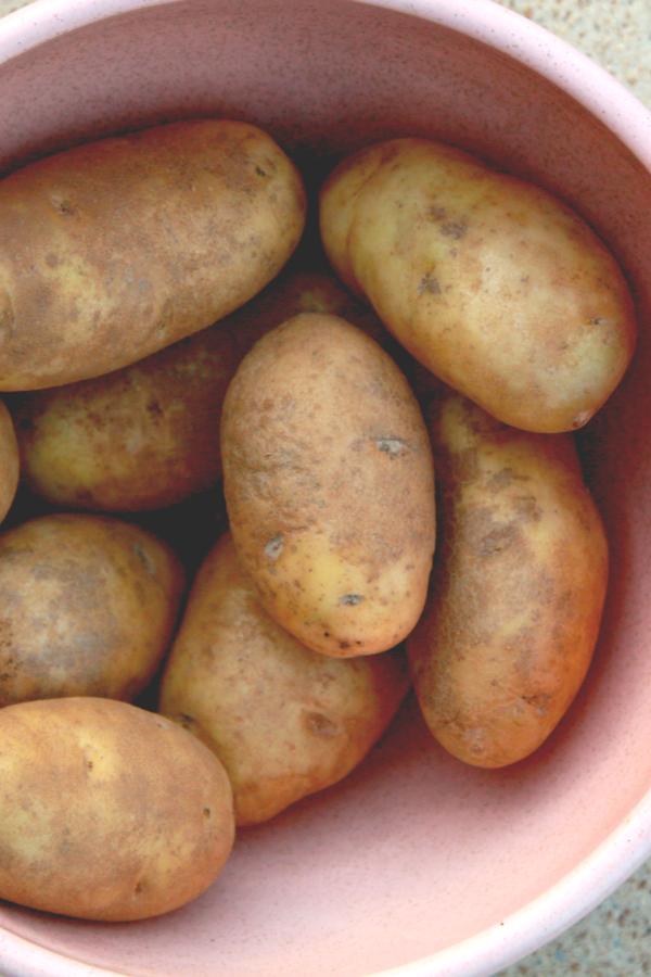 medium russet potatoes