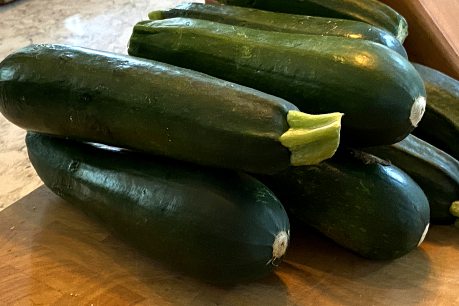 zucchini from the garden