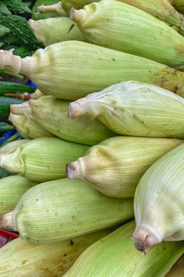 corn on the cob in husk
